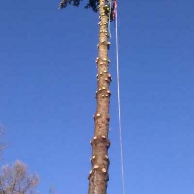 wycinka-drzew-bielsko